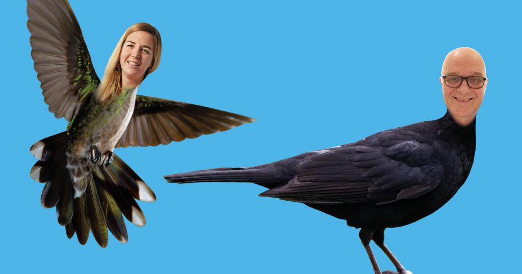 Amsel & Kolibri